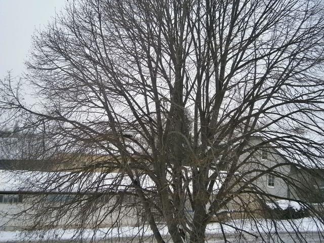 Weinviertel winter